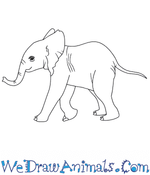 How to Draw a Baby African Elephant in 7 Easy Steps