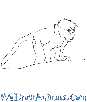 How to Draw a Baby Baboon in 8 Easy Steps