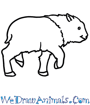 How to Draw a Baby Bison in 4 Easy Steps