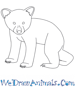 How to Draw a Baby Black Bear in 7 Easy Steps