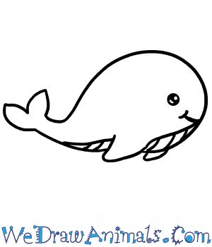 How to Draw a Baby Blue Whale in 4 Easy Steps