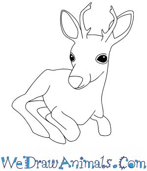 How to Draw a Baby Buck Deer in 7 Easy Steps