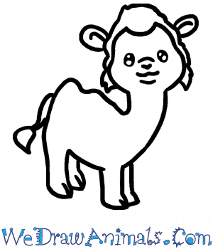 How to Draw a Baby Camel in 7 Easy Steps