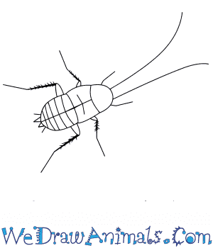 How to Draw a Baby Cockroach in 5 Easy Steps