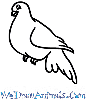 How to Draw a Baby Dove in 4 Easy Steps