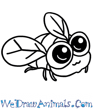 How to Draw a Baby Fly in 4 Easy Steps