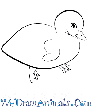 How to Draw a Baby Goose in 5 Easy Steps