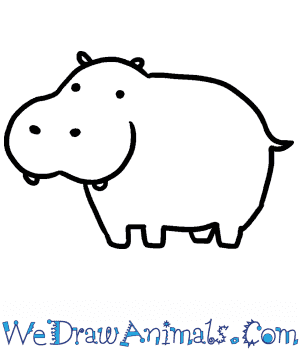 How to Draw a Baby Hippopotamus in 3 Easy Steps