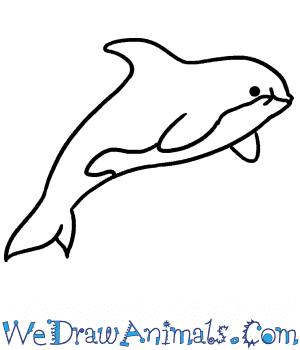 How to Draw a Baby Killer Whale in 4 Easy Steps