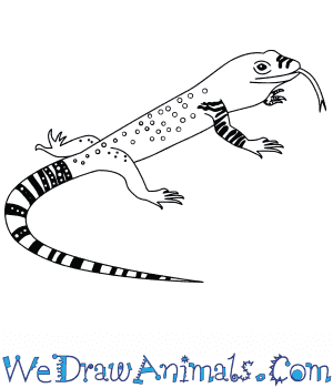 How to Draw a Baby Komodo Dragon in 7 Easy Steps