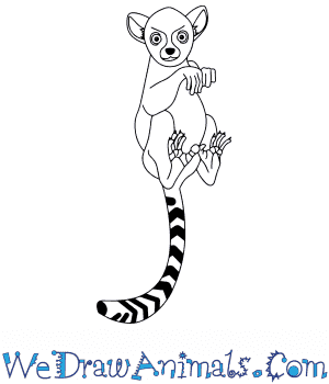 How to Draw a Baby Lemur in 10 Easy Steps