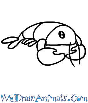 How to Draw a Baby Lobster in 3 Easy Steps