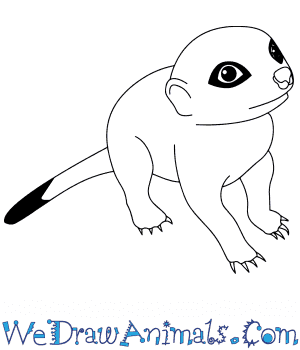 How to Draw a Baby Meerkat in 7 Easy Steps