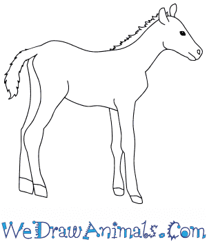 How to Draw a Baby Mustang Horse in 6 Easy Steps