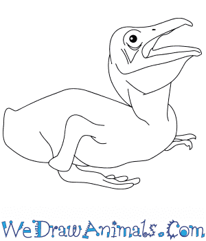 How to Draw a Baby Pelican in 6 Easy Steps