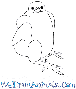 How to Draw a Baby Peregrine Falcon in 5 Easy Steps
