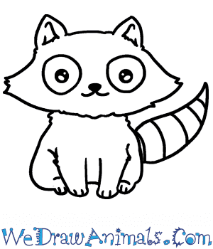 How to Draw a Baby Raccoon in 5 Easy Steps