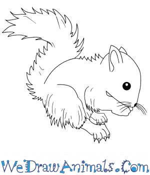 How to Draw a Baby Red Squirrel in 7 Easy Steps