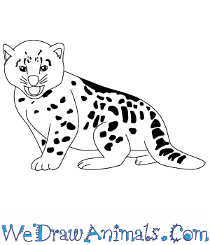 How to Draw a Baby Snow Leopard in 6 Easy Steps