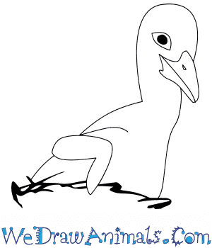 How to Draw a Baby Stork in 4 Easy Steps