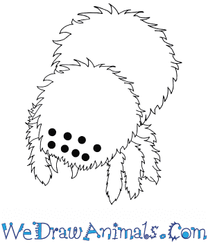 How to Draw a Baby Tarantula in 5 Easy Steps