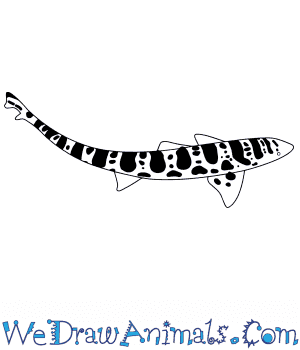 How to Draw a Baby Tiger Shark in 3 Easy Steps