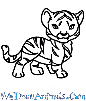 How to Draw a Baby Tiger in 7 Easy Steps