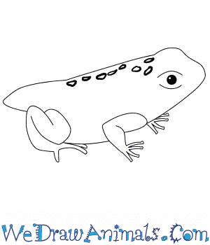 How to Draw a Baby Toad in 4 Easy Steps