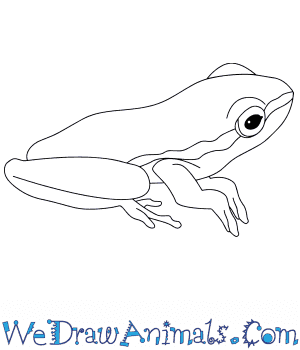 How to Draw a Baby Tree Frog in 5 Easy Steps
