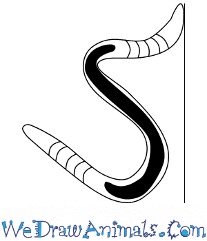 How to Draw a Baby Worm in 3 Easy Steps
