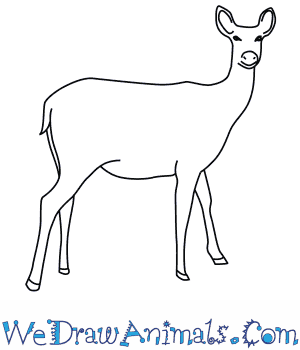 How to Draw a Barasingha Deer in 7 Easy Steps