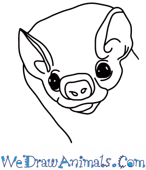 How to Draw a Bat Head in 6 Easy Steps
