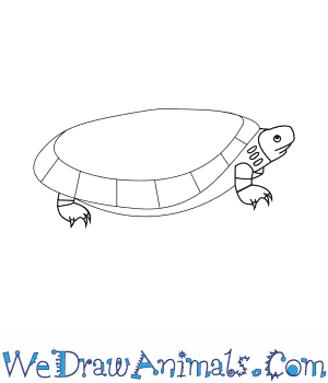 How to Draw a Beals Eyed Turtle in 9 Easy Steps