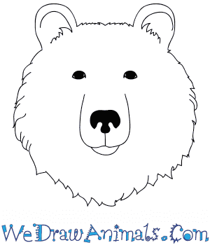 How to Draw a Bear Face in 9 Easy Steps