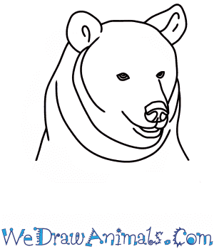 How to Draw a Bear Head in 7 Easy Steps