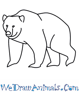 How to Draw a Bear in 6 Easy Steps