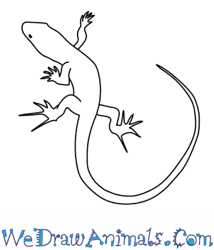 how to draw a bedriagas rock lizard