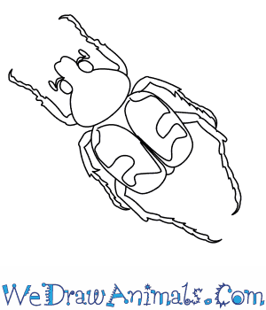 How to Draw a Bee Beetle in 7 Easy Steps