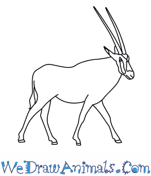 How to Draw a Beisa Oryx in 8 Easy Steps