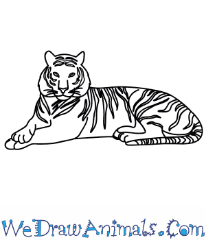 How to Draw a Bengal Tiger in 9 Easy Steps