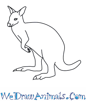 How to Draw a Bennetts Wallaby in 7 Easy Steps