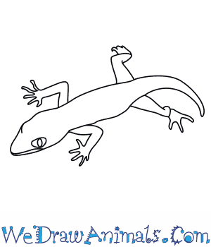 How to Draw a Bent Toed Gecko in 8 Easy Steps
