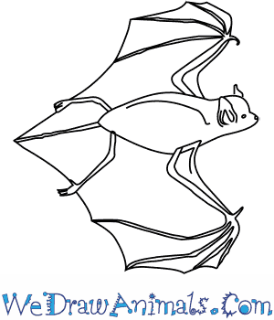 How to Draw a Big Brown Bat in 6 Easy Steps