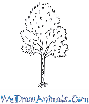 How to Draw a Birch Tree in 5 Easy Steps