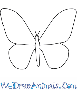 How to Draw a Birdwing Butterfly in 5 Easy Steps