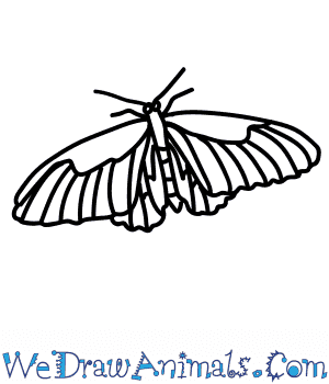 How to Draw a Birdwing in 8 Easy Steps