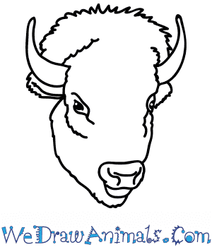 How to Draw a Bison Face in 6 Easy Steps