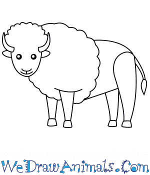 How to Draw a Bison For Kids in 6 Easy Steps