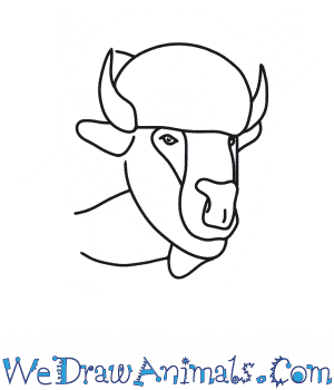 How to Draw a Bison Head in 7 Easy Steps