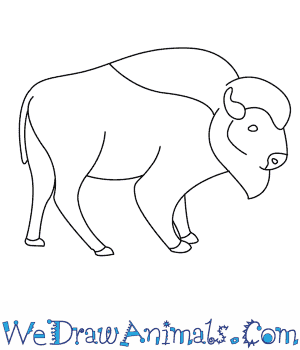 How to Draw a Bison in 8 Easy Steps